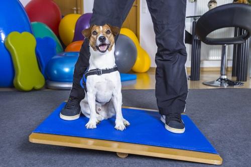 Ausbildung zum/r Hundephysiotherapeuten/in