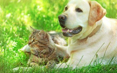 Ausbildung zum/r Tierpsychologen/in für Hunde und Katzen