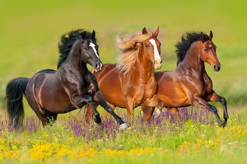 Ausbildung zum/r Tierpsychologen/in für Pferde