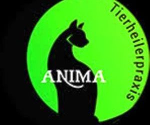 ANIMA Tierheilerpraxis – die mobile Katzen-Praxis