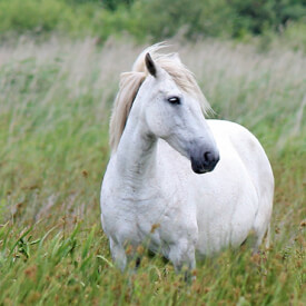 Versteckte Gifte – die heimliche Gefahr für Pferde | Verbandszeitschrift II/2018